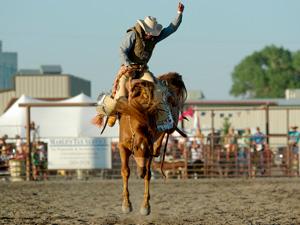 Rodeo bucking bronc