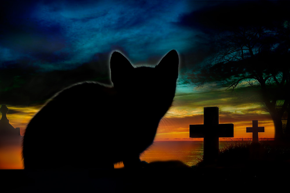 Cat in a cemetary